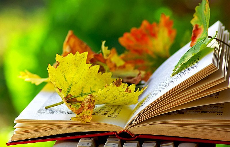 reading-a-book-in-fall